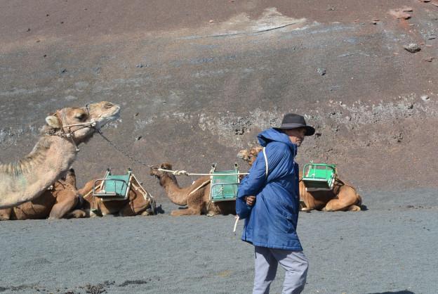 Mann und Kamel